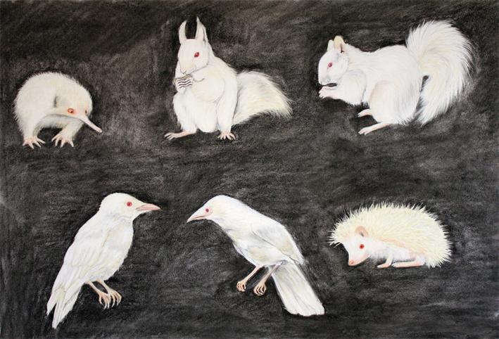 Albino Study